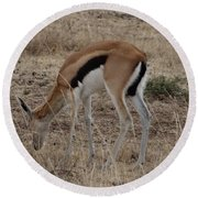 African Wildlife 4 Round Beach Towel