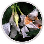After The Rain - Flower Photography Round Beach Towel