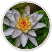Round Beach Towel featuring the photograph After The Rain - Water Lily 003 by George Bostian