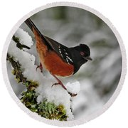 Round Beach Towel featuring the photograph After The Snow Storm 365-293 by Inge Riis McDonald