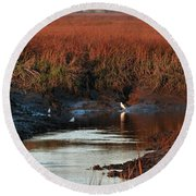 Round Beach Towel featuring the photograph Afternoon Break by Laura Ragland