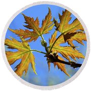 Against The Autumn Blue Sky Round Beach Towel