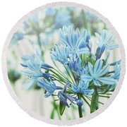 Round Beach Towel featuring the photograph Agapanthus 2 by Cindy Garber Iverson
