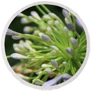 Round Beach Towel featuring the photograph Agapanthus, The Spider Flower by Yoel Koskas