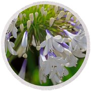 Agapanthus Queen Mum Round Beach Towel
