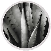 Round Beach Towel featuring the photograph Agave And Patterns by Eduard Moldoveanu