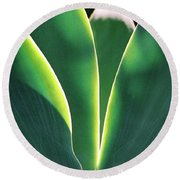 Agave Round Beach Towel