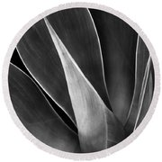 Agave No 3 Test Round Beach Towel by Ben and Raisa Gertsberg