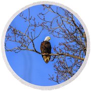 Alaskan Bald Eagle In Tree At Sunset Round Beach Towel