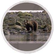 Alaskan Brown Bear Dining On Mollusks Round Beach Towel
