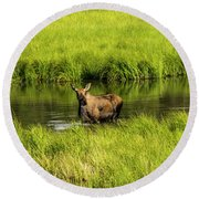 Alaskan Moose Round Beach Towel