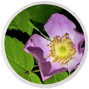 Round Beach Towel featuring the photograph Alberta Wild Rose Opens For Early Sun by Darcy Michaelchuk