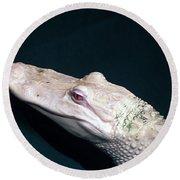 Albino Alligator  Round Beach Towel