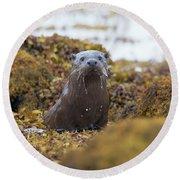 Alert Female Otter Round Beach Towel