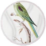 Alexandrine Parakeet Round Beach Towel by Nicolas Robert