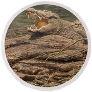 Round Beach Towel featuring the painting Alligator by Alan M Hunt