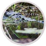 Alligator And Hatchling-2 Round Beach Towel
