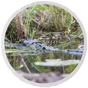 Alligator And Hatchling Round Beach Towel