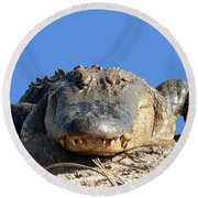 Round Beach Towel featuring the photograph Alligator Approach .png by Al Powell Photography USA