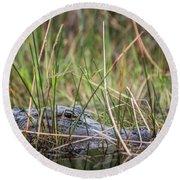 Alligator In Grass 0609 Round Beach Towel