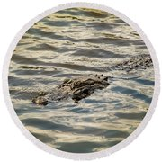 Alligator In Lake Alice Round Beach Towel by Louis Ferreira