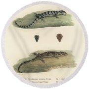 Alligator Lizards Round Beach Towel