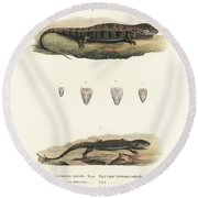 Alligator Lizards From Mexico Round Beach Towel