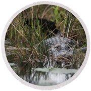 Alligator Lurks-0620 Round Beach Towel