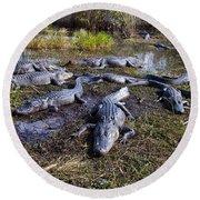 Alligators 280 Round Beach Towel
