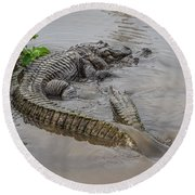Alligators Courting Round Beach Towel