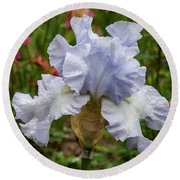 Round Beach Towel featuring the photograph Almost Blue Bearded Iris by Jean Noren