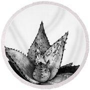 Aloe Cactus Round Beach Towel