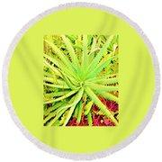Aloha Aloe In Puna In Lime Round Beach Towel