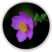 Anenome Purple Round Beach Towel by Ronda Ryan
