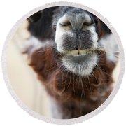 Alpaca #1 Round Beach Towel