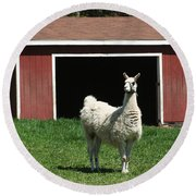 Round Beach Towel featuring the photograph Alpaca And Red Shed by William Selander