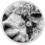 Alpaca Close Round Beach Towel