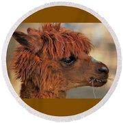 Alpaca Portrait Round Beach Towel