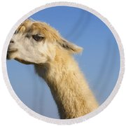 Alpaca Round Beach Towel