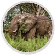 Alpha Male Elephant Round Beach Towel