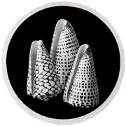 Alphabet Cone Shells Conus Spurius Round Beach Towel by Jim Hughes