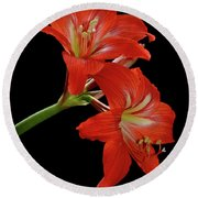 Round Beach Towel featuring the photograph Amaryllis by AnnaJo Vahle