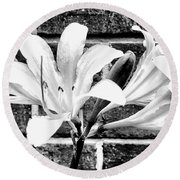 Amaryllis Inspiration Round Beach Towel