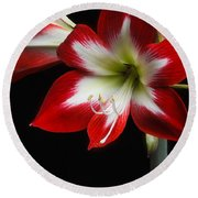 Round Beach Towel featuring the photograph Amaryllis 'quito' by Ann Jacobson