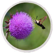 Round Beach Towel featuring the photograph Amazing Insects - Hummingbird Moth by Kerri Farley