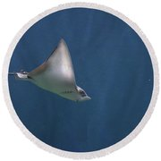 Amazing Stingray Underwater In The Deep Blue Sea  Round Beach Towel