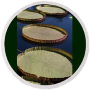 Amazonas Lily Pads II Round Beach Towel by Suzanne Gaff