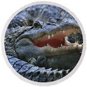 American Alligators Round Beach Towel
