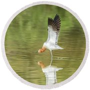 American Avocet Stretching Round Beach Towel by Tam Ryan