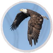 American Bald Eagle 2017-5 Round Beach Towel by Thomas Young